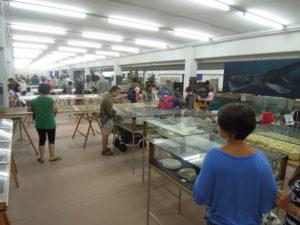 Il Museo Malacologico di Cupra Marittima resta chiuso un' altra settimana